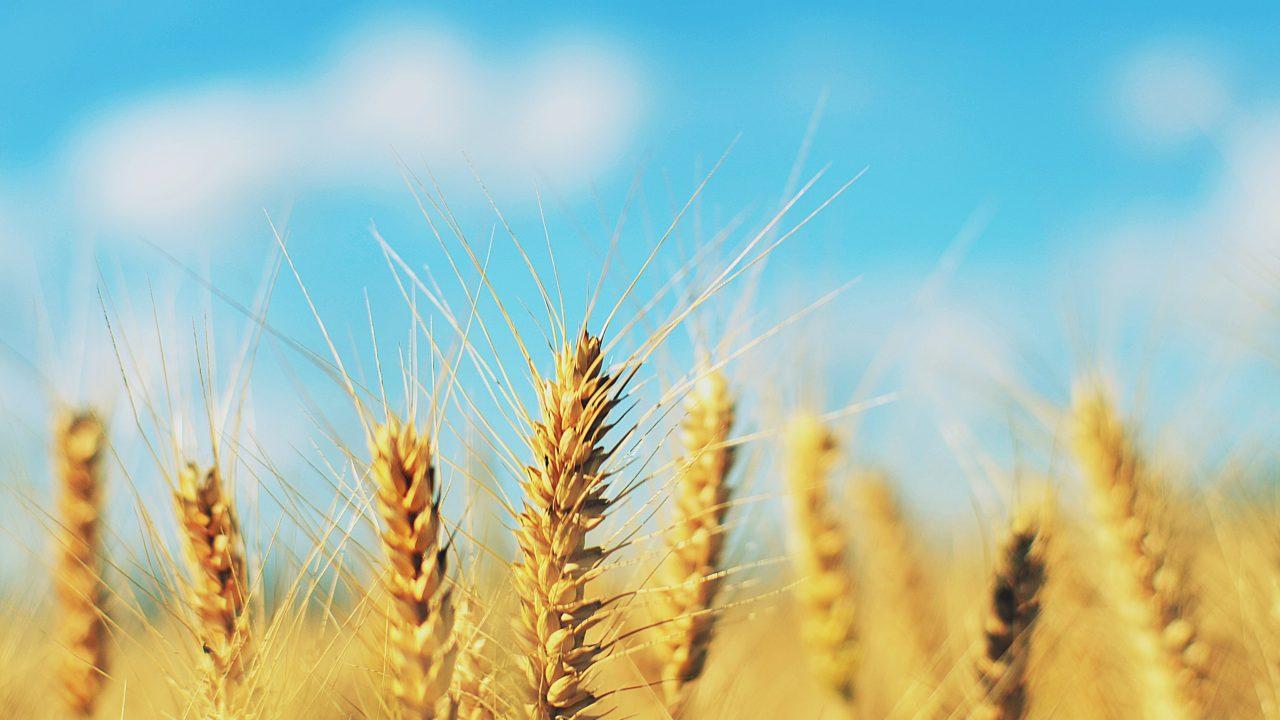 小麦、全粒粉