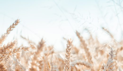 「穂発芽」という問題〜小麦について知って欲しい〜