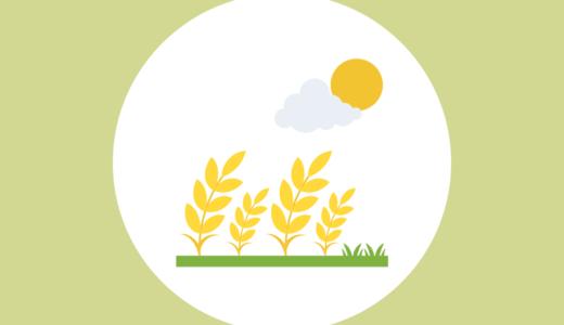 【穂発芽】という問題〜小麦と農家さんについて知って欲しい〜